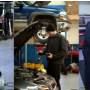Nordgren Automotive, Medina MN and Plymouth MN, 55357 and 55441, Auto Repair, Engine Repair, Brake Repair, Transmission Repair and Auto Electrical Service